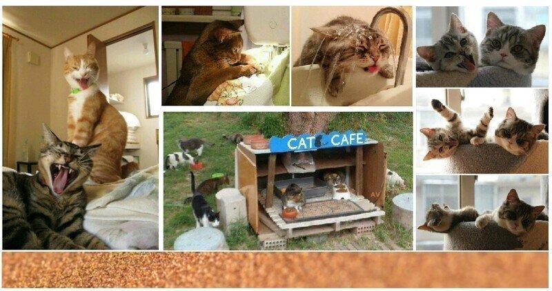 Один день из жизни домашнего кота