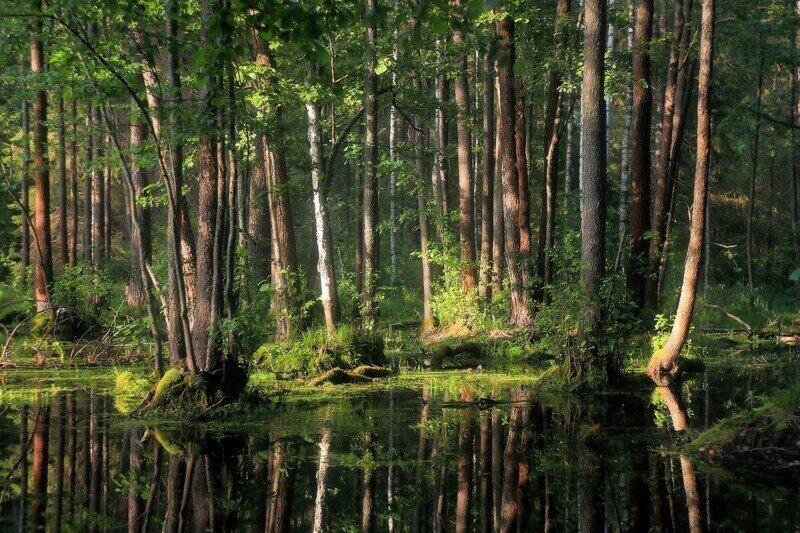 Среди лесов