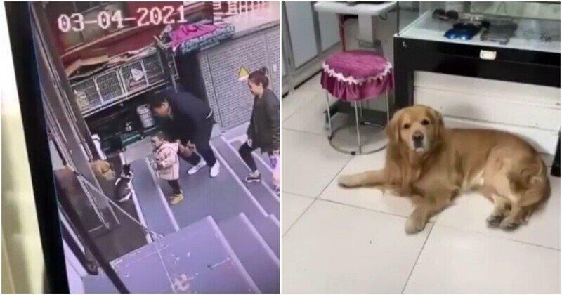 Пёс по команде хозяйки утащил ленивого кота с крыльца магазина