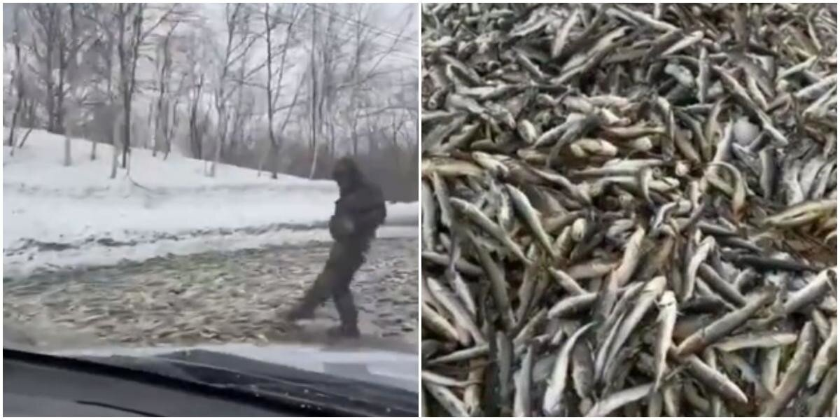 На Сахалине дорогу полностью завалило рыбой