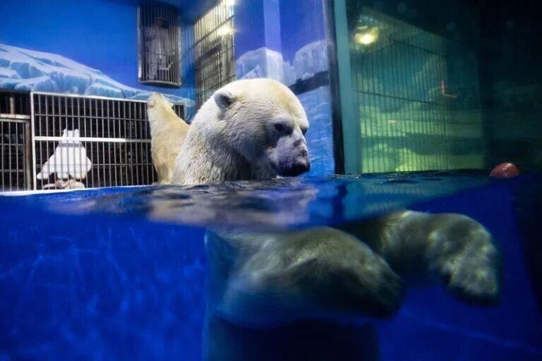 Активисты раскритиковали «отель с белыми медведями»