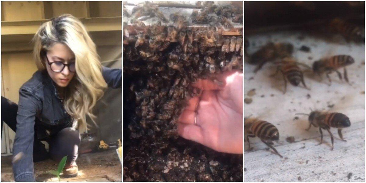 Красивая девушка голыми руками спасает пчёл от гибели