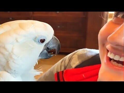 Попугай и щенок