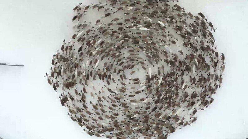 Гипнотическое видео:  олени водят хоровод