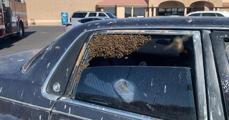 Пожарный спас автомобиль от роя пчёл на парковке супермаркета