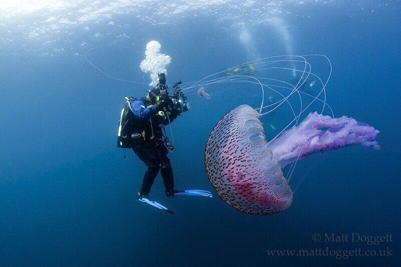 Подводный фотограф Matt Doggett
