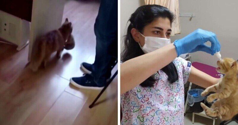 В Турции уличная кошка принесла котят в медклинику, надеясь на помощь