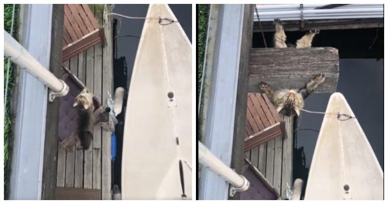 Так вот зачем котам нужны когти