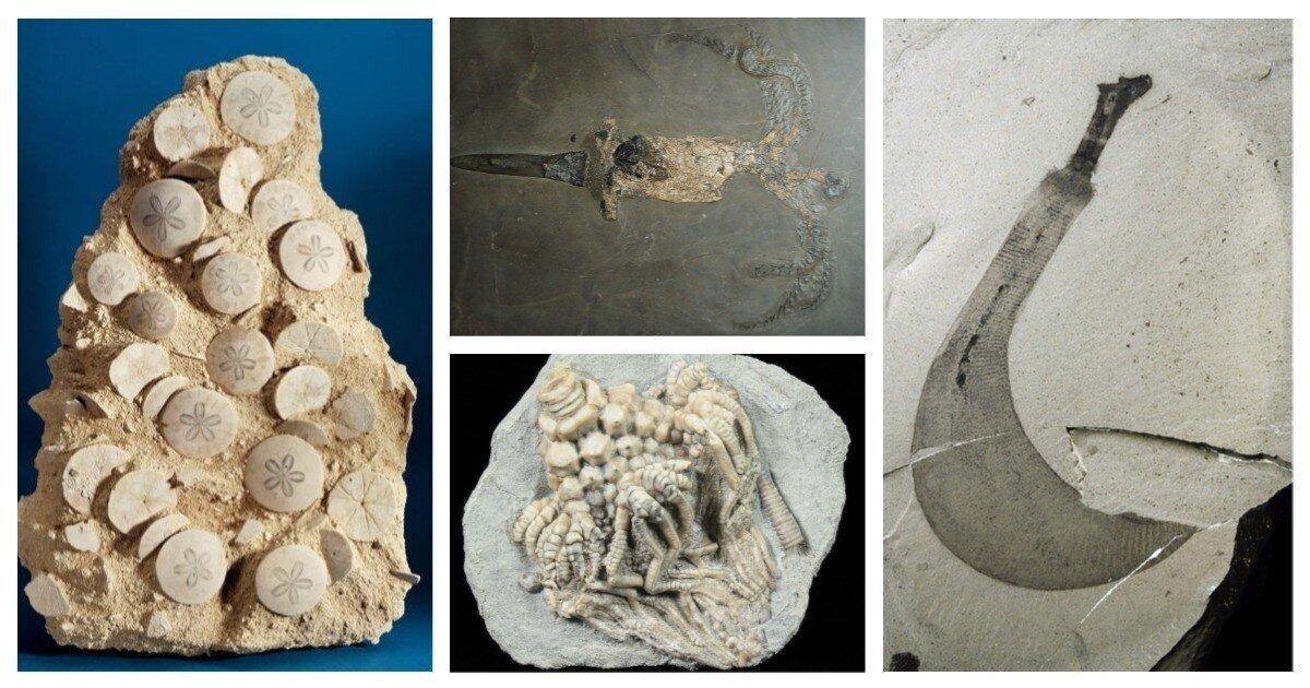 Удивительные окаменелости, в существование которых сложно поверить