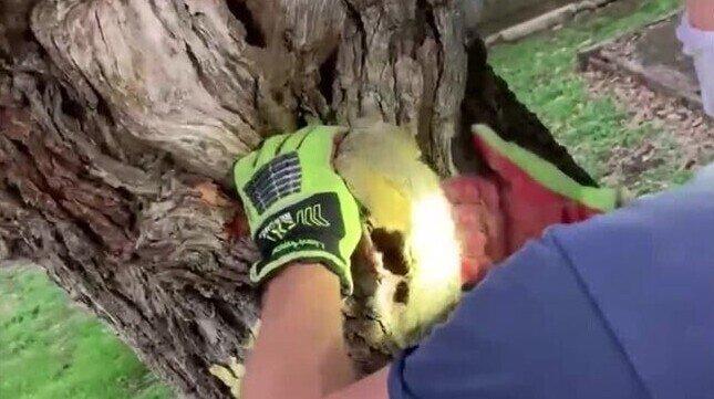 Пожарный спас белку, застрявшую в дереве