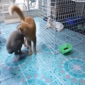 Ай да кролик, ай да сукин сын