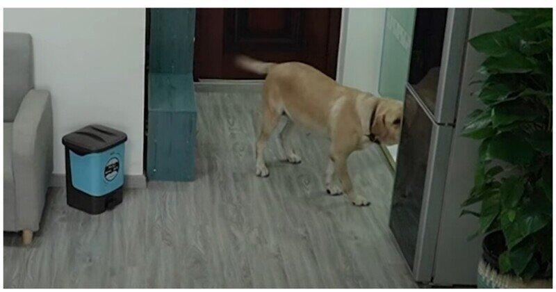 Хитрый пёс украл мороженое, съел его и спрятал улики