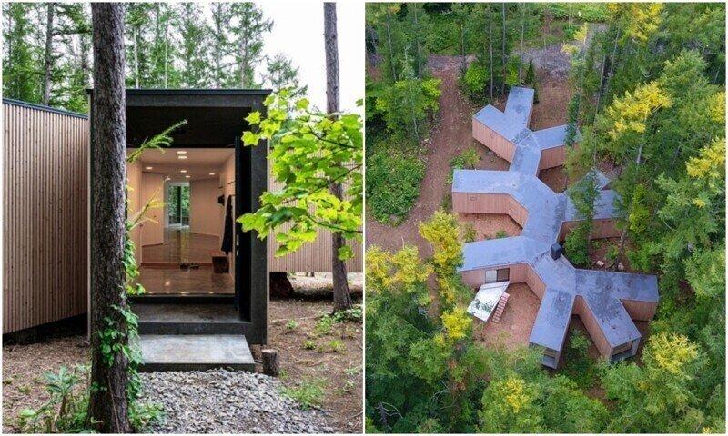 Архитекторы показали эко-домик в форме ветвей дерева