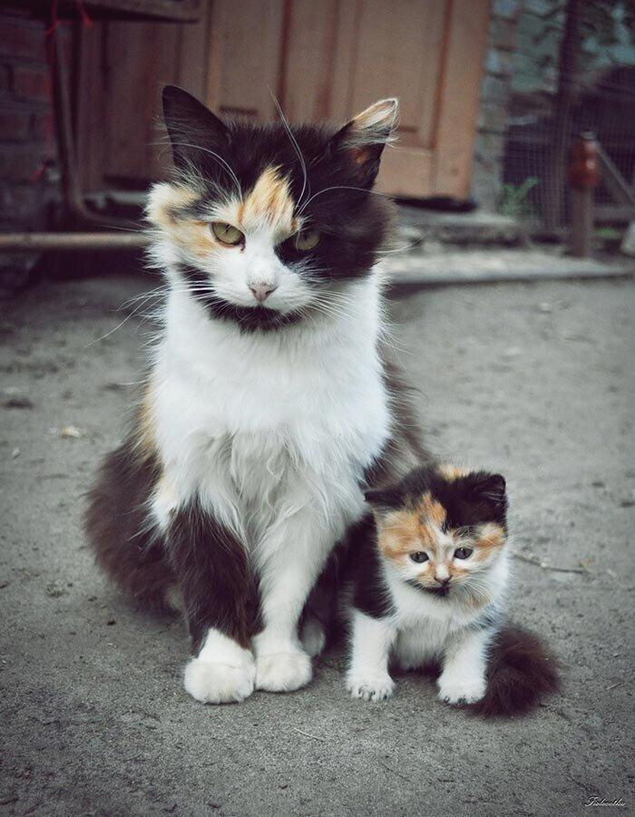 Красавцы коты и их очаровательные мини-копии