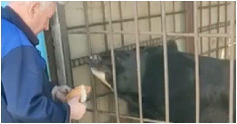 Медведь чуть не откусил деду руку