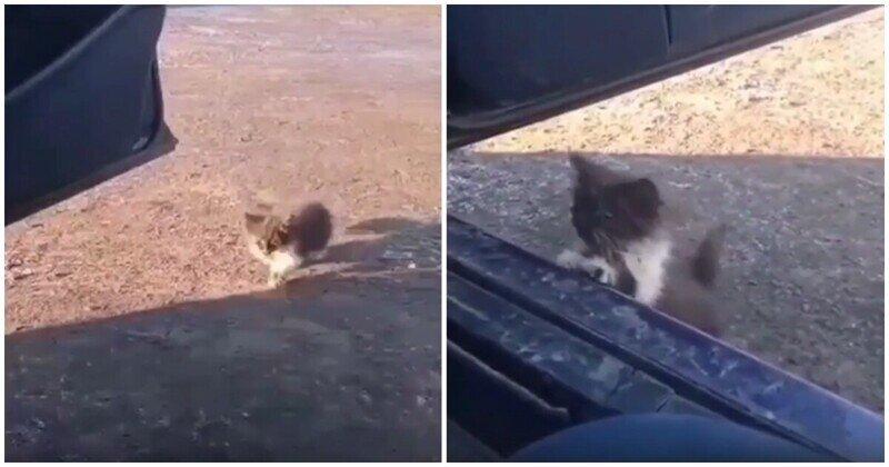 Котенок нашел своего человека