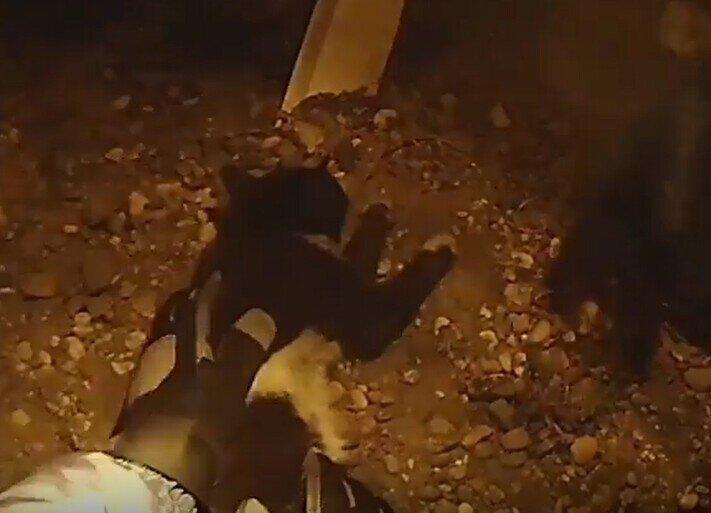 """""""Он уже не дышал"""": Во время пожара в Белогорске спасатели реанимировали кота"""
