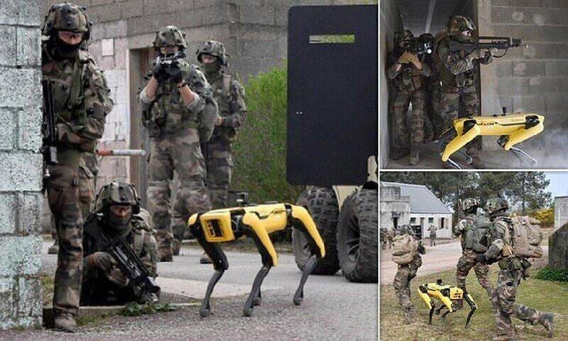 Французская армия приняла на службу робота-собаку