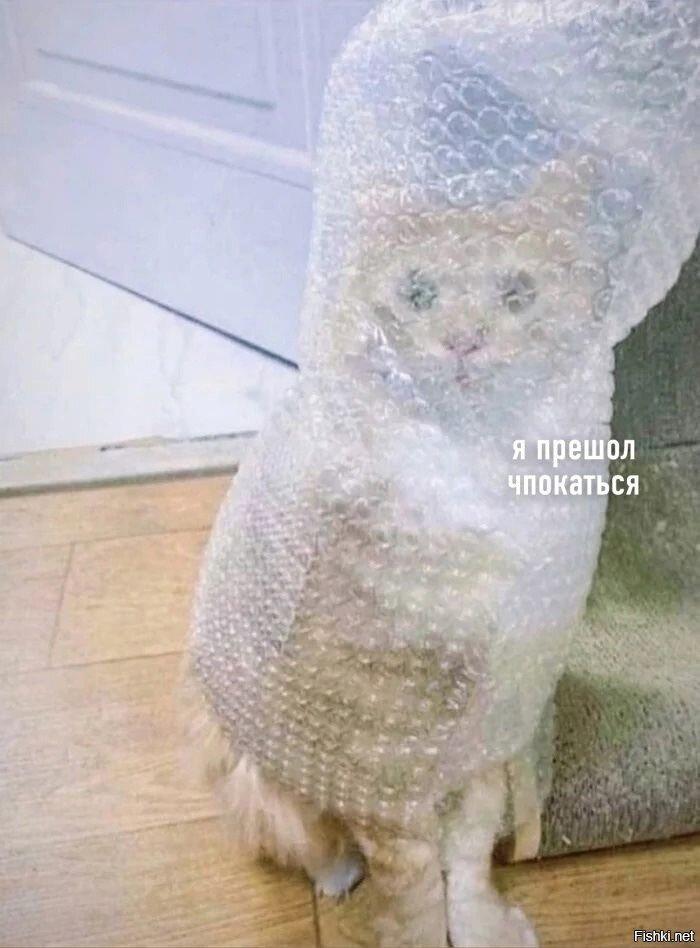 кот и пупырка