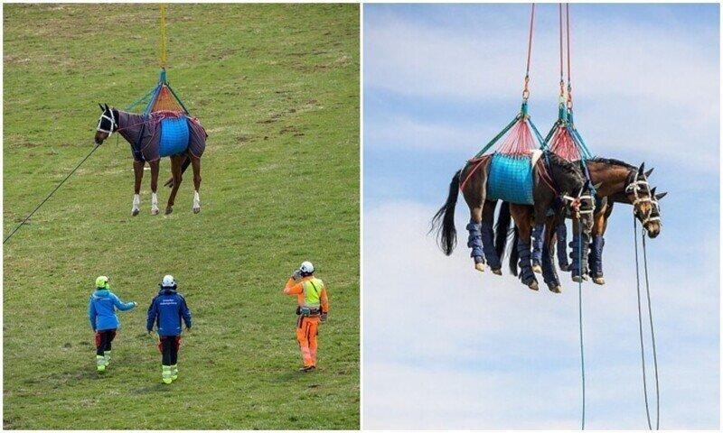 Полетели: как ВВС тренируются перевозить лошадей