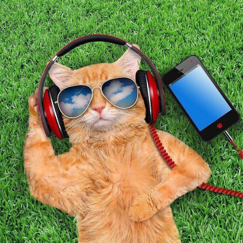 Кошачья музыка – какие звуки любят кошки?