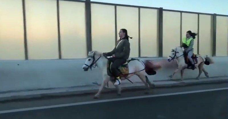 Это вам не мотоциклисты! Две девушки на лошадях пронеслись по проспекту среди машин