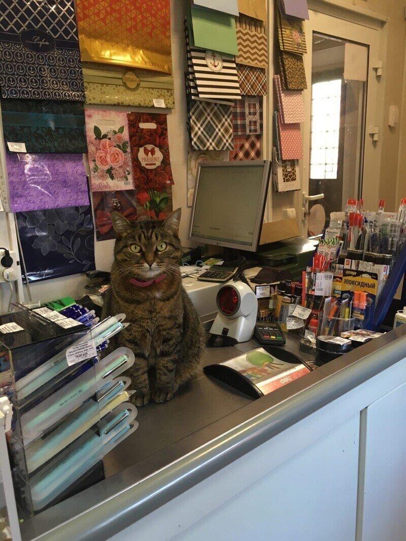 Зашёл сегодня в канцелярку, продавец не пробил мне ни один товар!