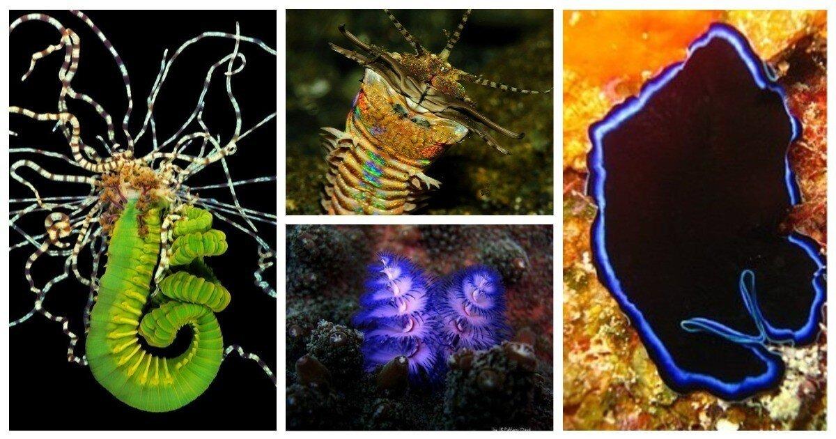 20 червей, которые поразят вас своей красотой