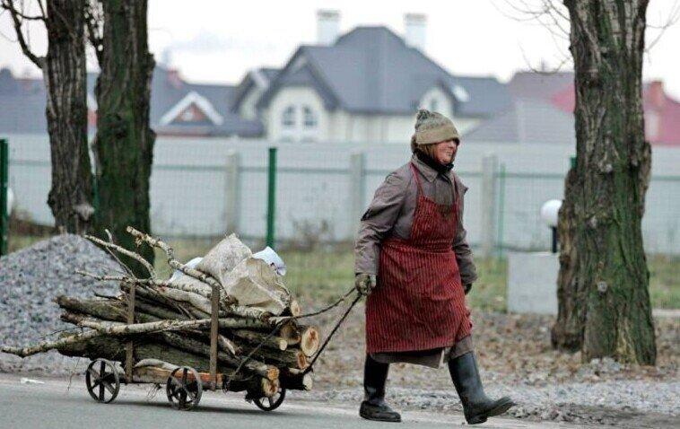 Малоимущим россиянам позволят собирать валежник по-новому