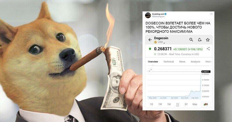 Полцарства на Dogecoin, или история невероятного взлета