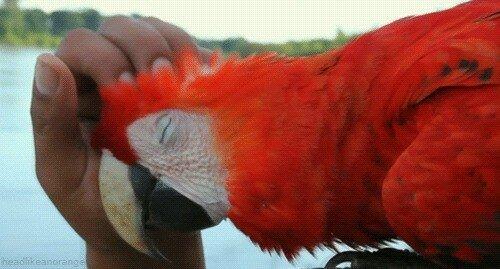 Пестрый мир попугаев