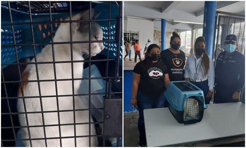 """В Панаме """"задержали"""" кота, который пытался пронести наркотики в тюрьму"""