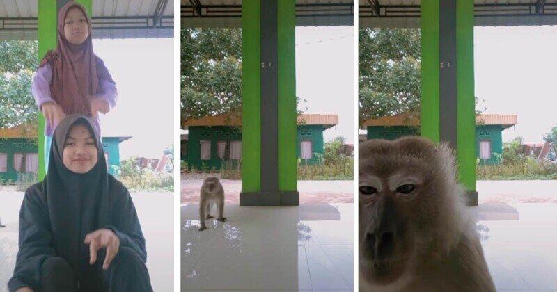 Вытеснила из кадра: обезьянка оказалась талантливее начинающих тиктокерш