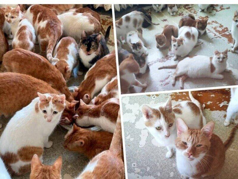 Москвичке после смерти бабушки достались 70 кошек