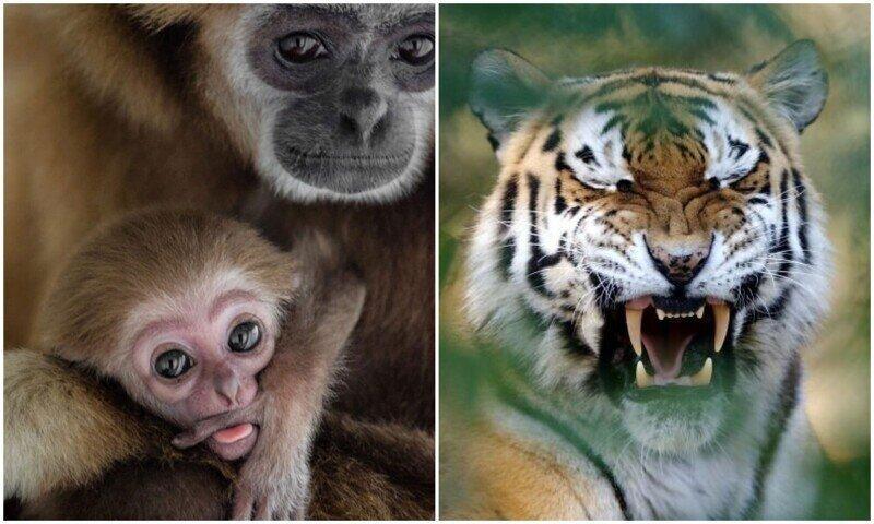 Фотограф показал свои лучшие фото дикой природы за 15 лет работы
