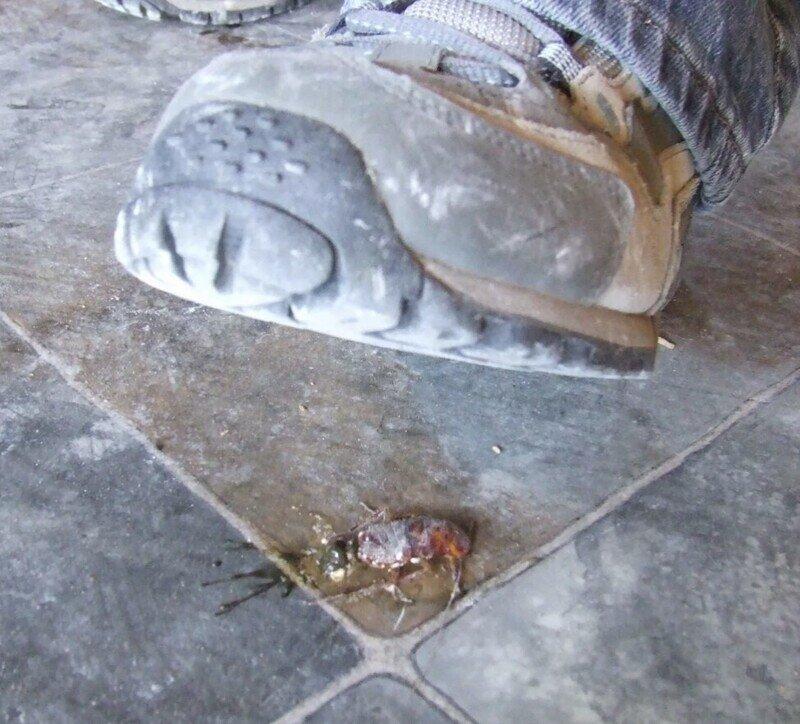 CLM: Жизни тараканов важны
