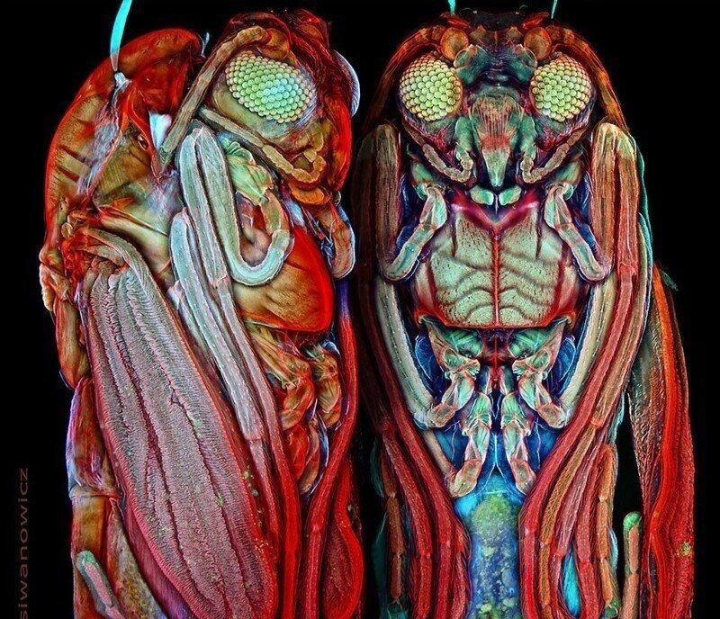 Невероятные фотографии крошечных существ под микроскопом