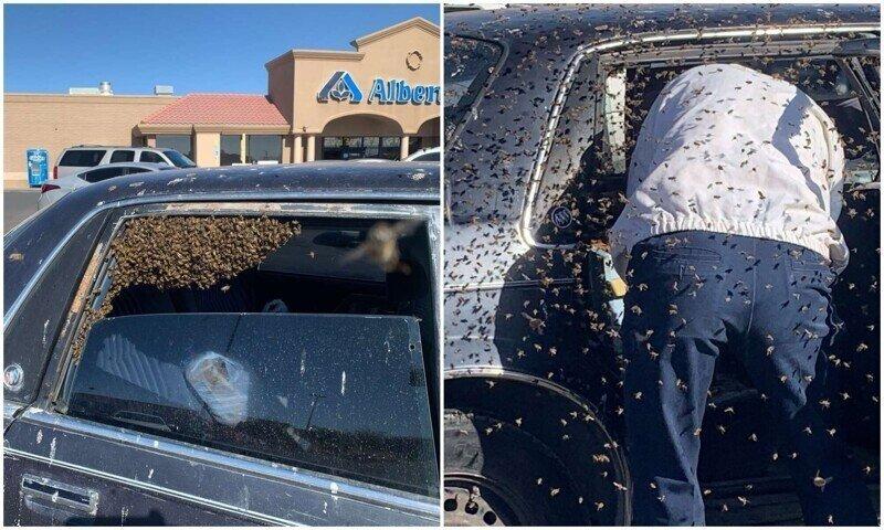 Американец на 10 минут отошел в супермаркет, а его авто оккупировали тысячи пчел