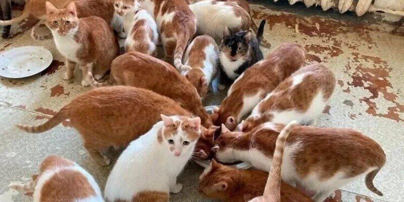 Москвичка получила в наследство от бабушки 70 кошек и теперь ищет им дом