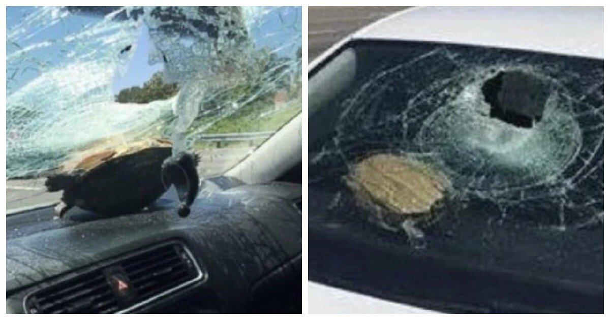 Во Флориде черепаха в полёте пробила стекло и чуть не покалечила пенсионерку