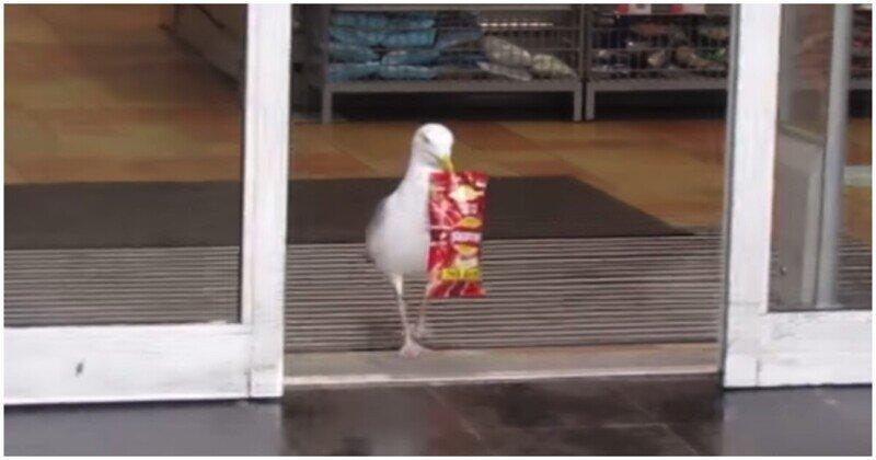 Чайка, которая берет от жизни всё