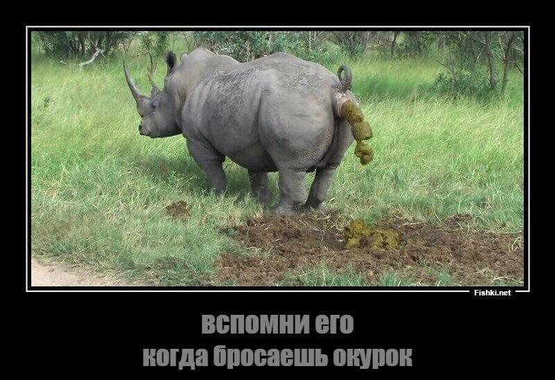 Призыв: Не бросайте окурки на газон!