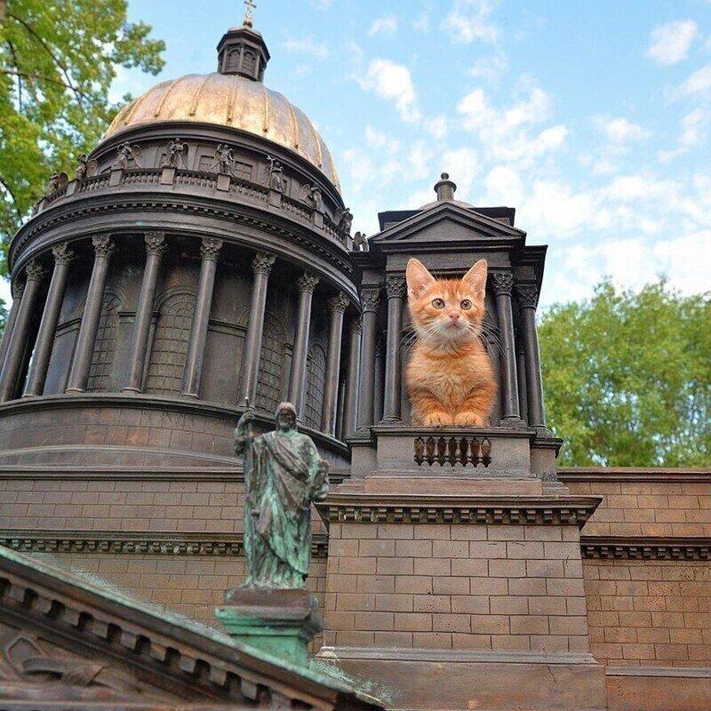 Кошачий Петербург: 10 главных мест, посвящённых кошкам