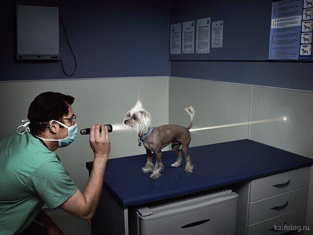 День ветеринара!