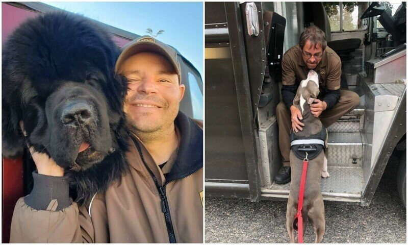 Какая милота: 20+ фото о любви собак к курьерам