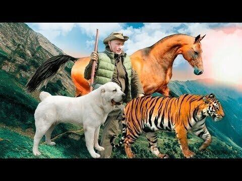 Каких животных дарили Путину: собаки, лошади, тигры, леопарды, пони и другие