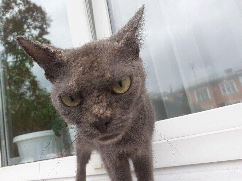 Очень колоритные и красивые котики