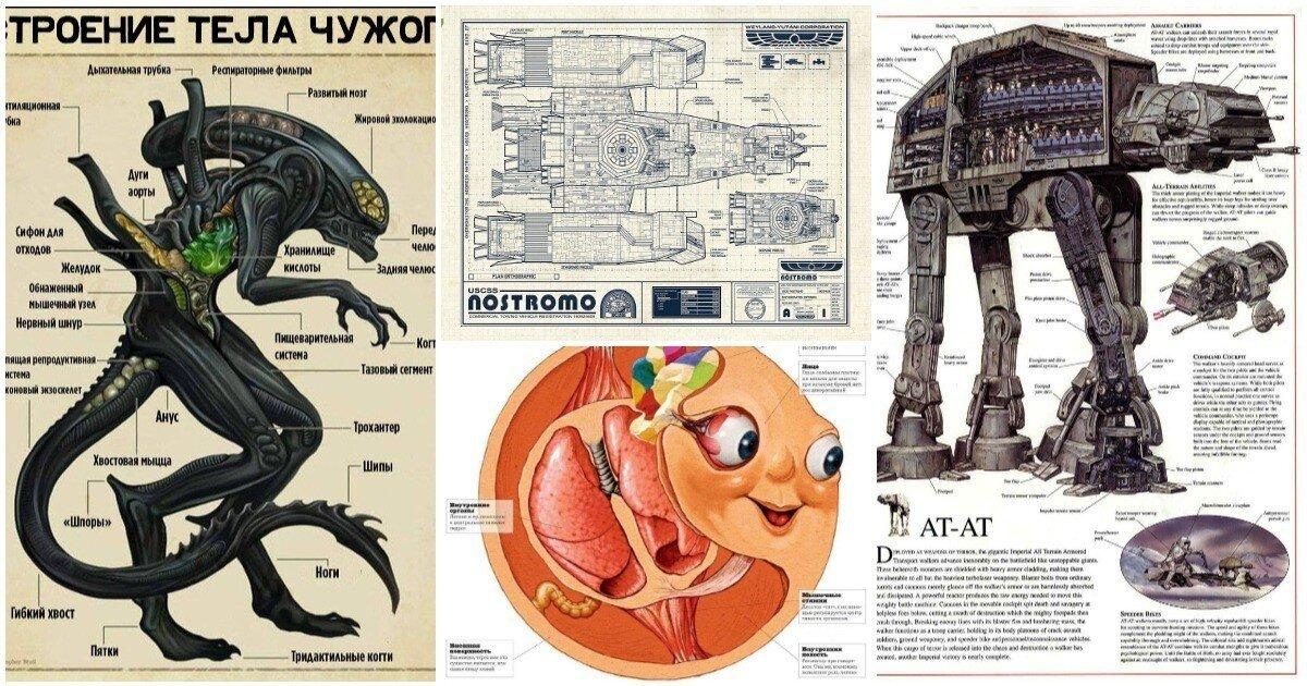 23 схемы, чертежа и анатомические карты тех, кого мы никогда не увидим