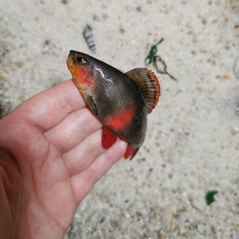 Леплю рыбок