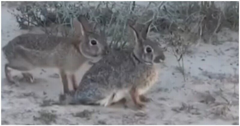 Крольчиха, которая умеет тонко намекнуть